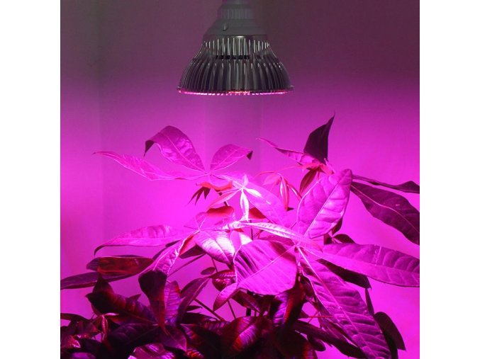 BIOGREEN SUPERGROW LED 12W FULL SPEKTRUM